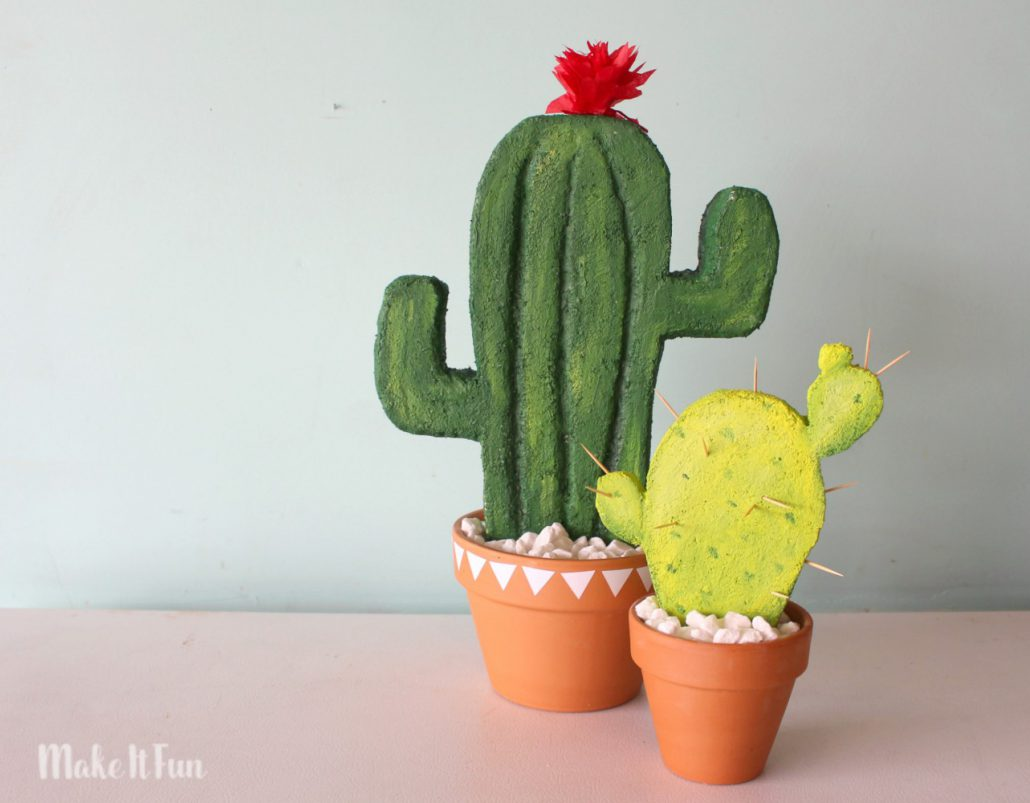 cactus-plants-for-your-room-decor